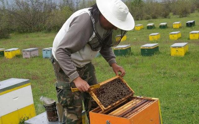 Η ΔΑΟΚ ΠΕ Κορινθίας ενημερώνει τους Μελισσοκόμους